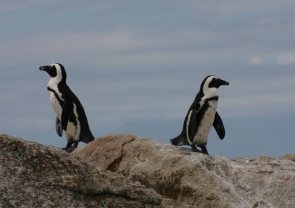 Penguins, Pringles and Particles